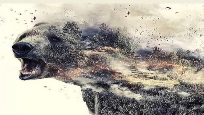 Ağustos ayında 105 orman yangını çıktı, binlerce hayvan öldü