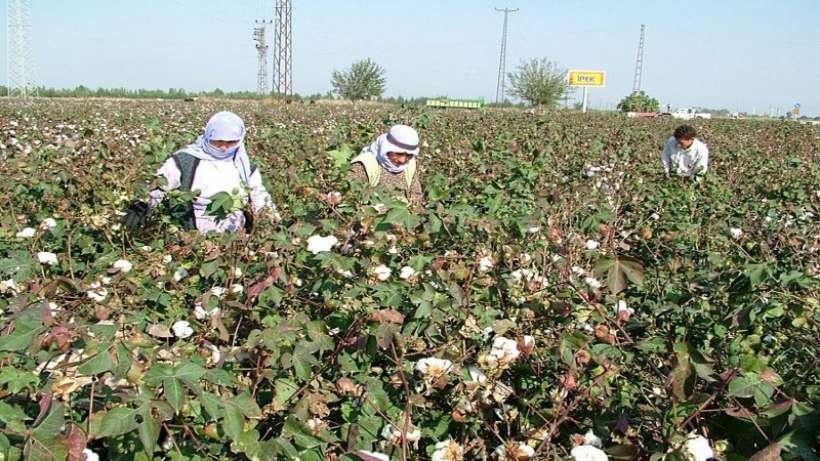 Dev Yapı-İş: Tarım işçilerinin grevinin yanındayız