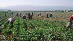"""Çukurova bölgesindeki işçi dernekleri, tarım işçilerine """"işe çıkmama"""" çağrısı yaptı"""