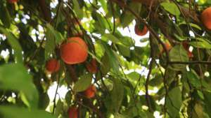 Destek alamayan çiftçi üretimi borçla yapıyor