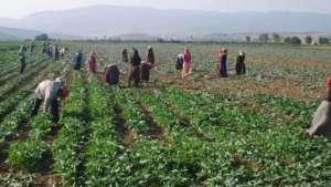 Direnen tarım işçilerinin grevi kazanımla sonuçlandı