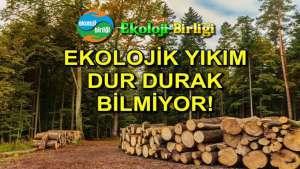 Ekoloji Birliği, Haziran ayı ekolojik tahribat raporunu açıkladı