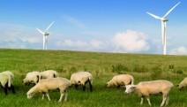 Rüzgar enerjisi hakkında doğru bilinen yanlışlar