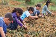Türkiye'de 2 milyonun üzerinde çocuk işçi var!